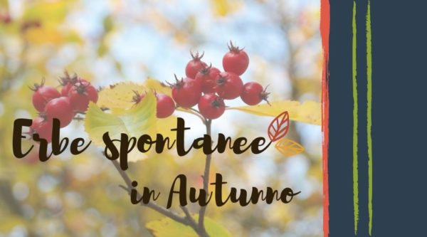 erbe-spontanee-autunno